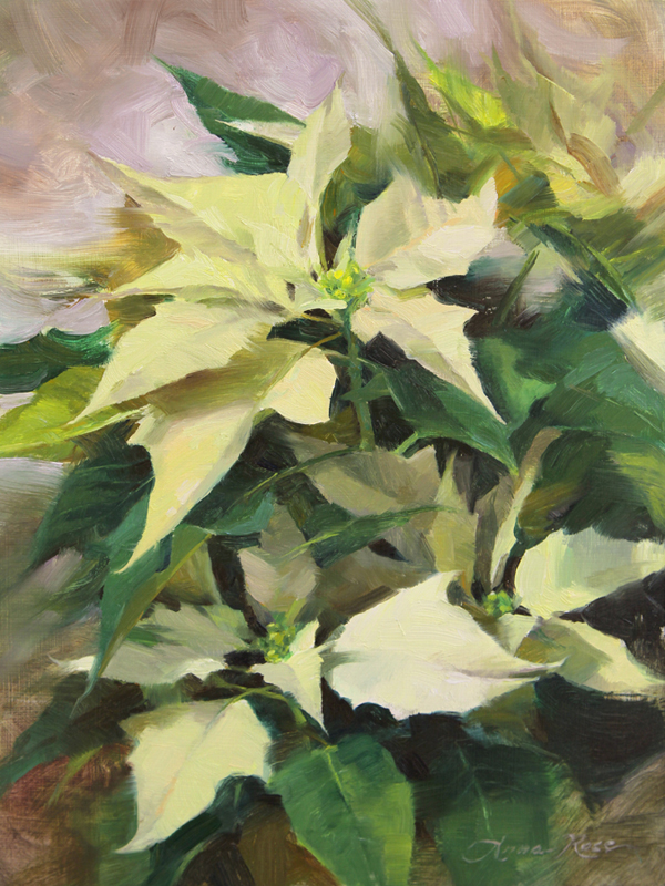 Snowcap Poinsettias
